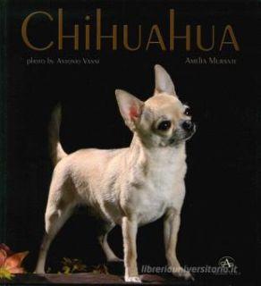 Chihuahua - Murante Amelia