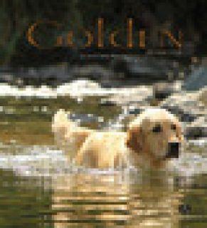 Golden Retriever -